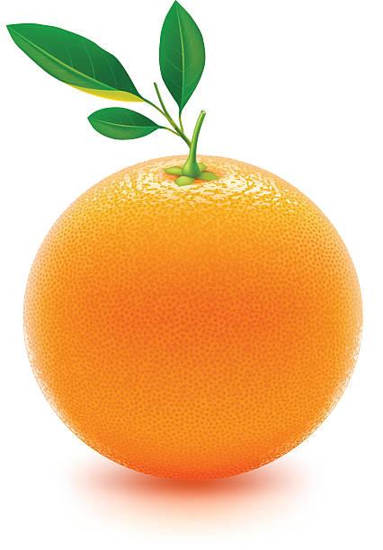 Fresh juicy orange in 3D on white background vector art illustration
