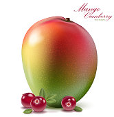 Fresh mango and cranberry design elements isolated on white background. Berries set with leaves. Mango fruit for fresh juice for packaging or web design. 3d illustration vector EPS 10.