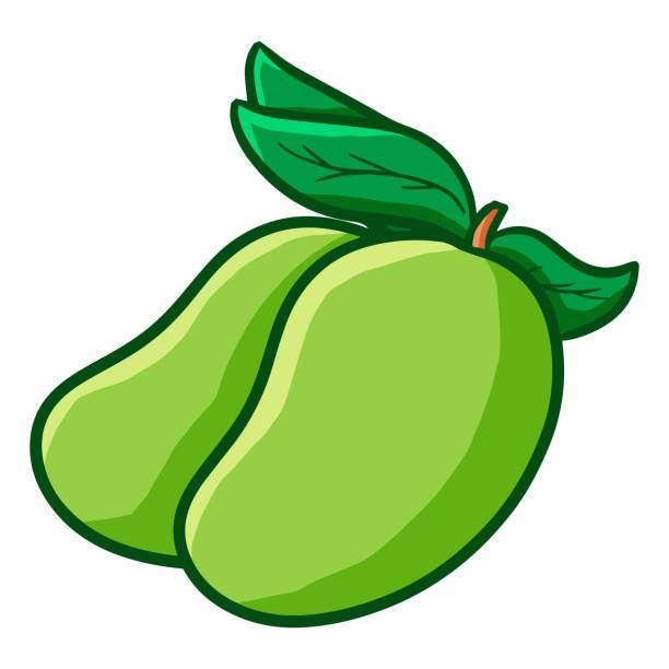 Best Green Mango Illustrations, Royalty-Free Vector ...
