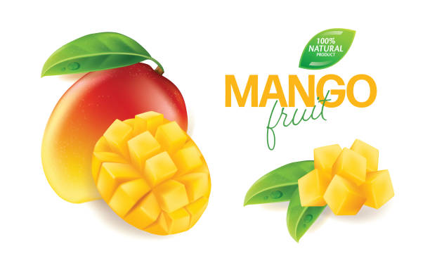 Fresh mango with slices and leaves Vector illustration Fresh Yellow mango with slices and leaves isolated white background Vector illustration mango stock illustrations