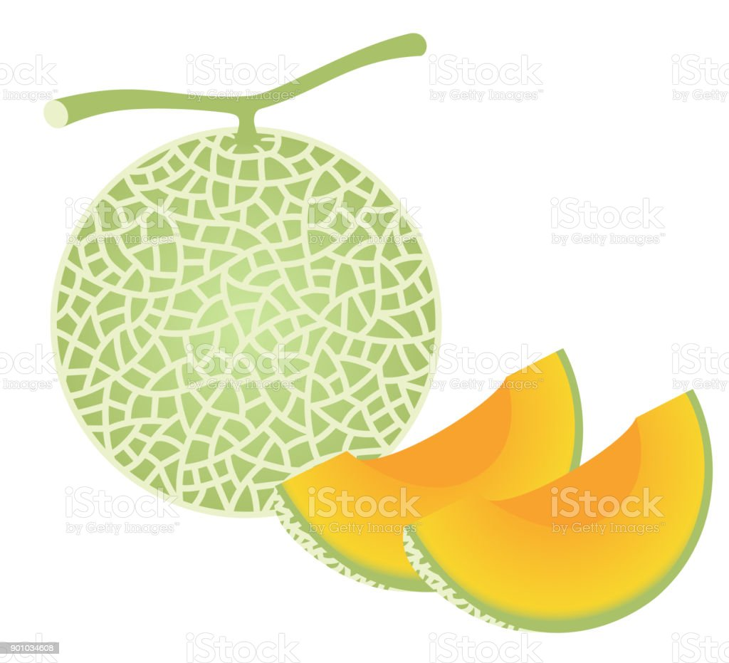 fresh melon, isolated on white background. vector art illustration