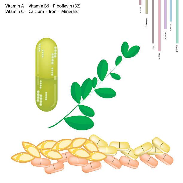 moringa frische blätter mit vitamin a, b6, b2 und c - wunderbaum stock-grafiken, -clipart, -cartoons und -symbole