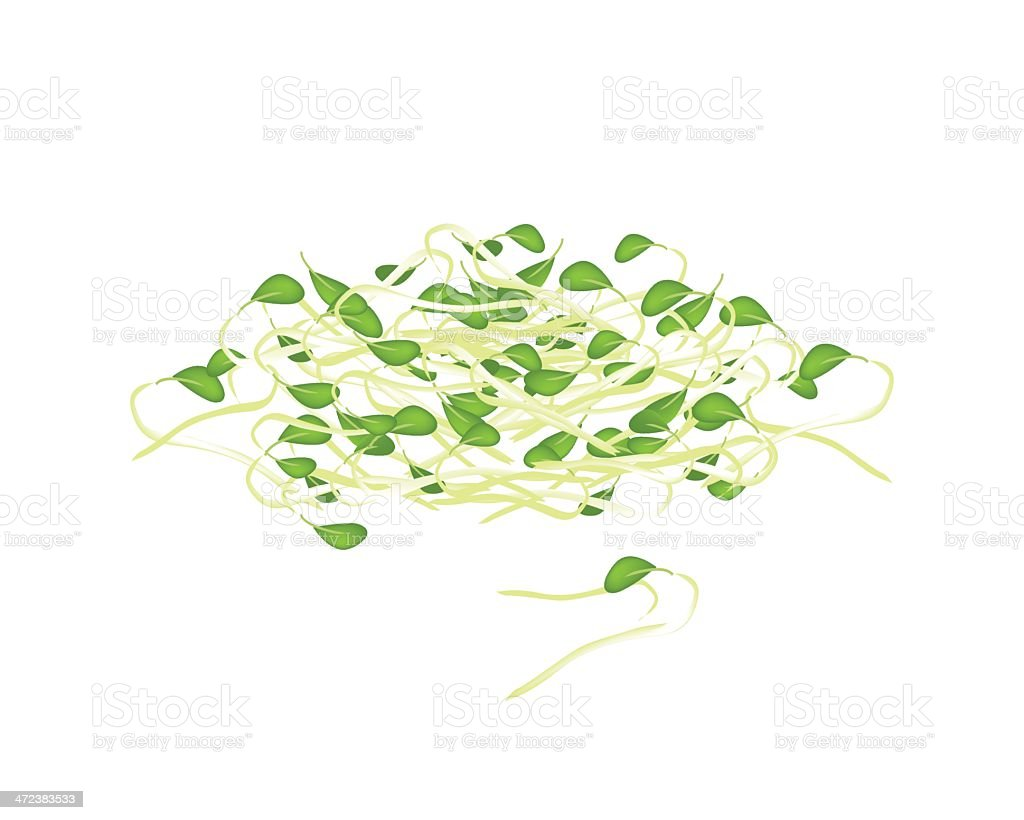 Fresh Mung Beans Sprouts on White Background vector art illustration