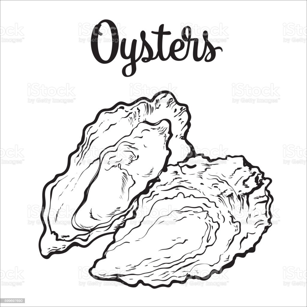 Fresh oyster isolated on a white background vector art illustration