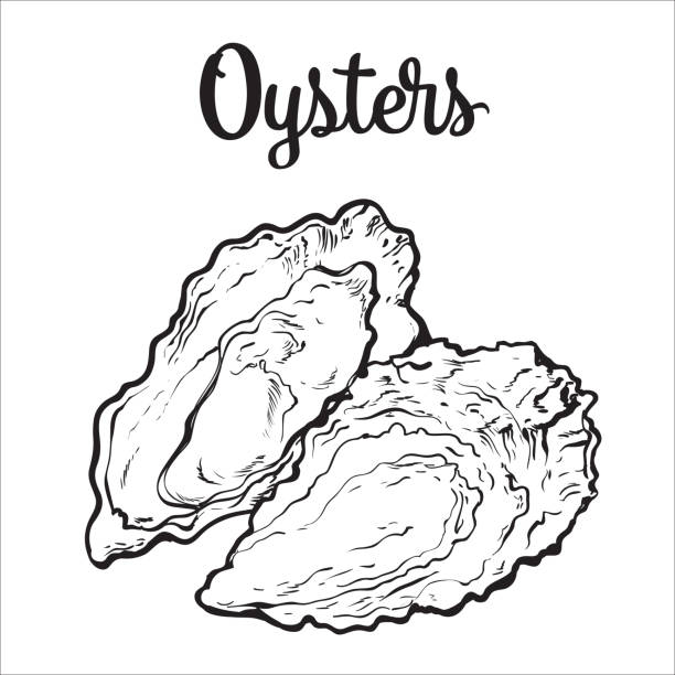 fresh oyster isolated on a white background - austernschalen stock-grafiken, -clipart, -cartoons und -symbole