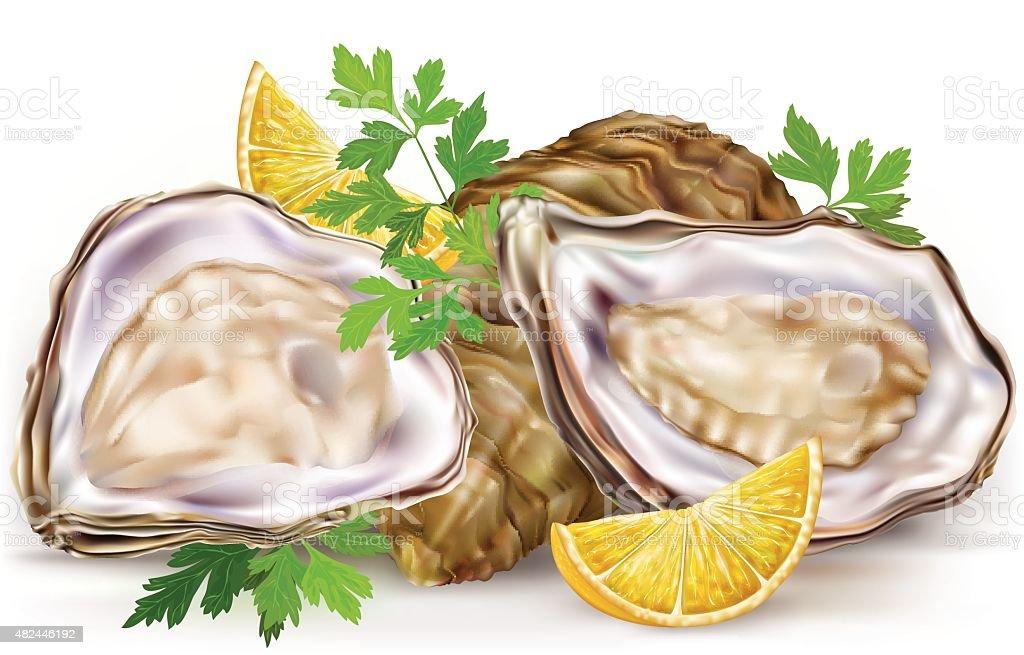 Fresh oysters with lemon vector art illustration