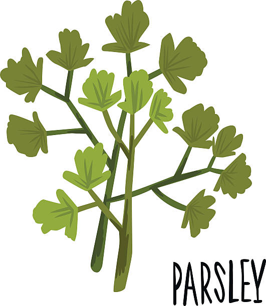 Top 60 Flat Leaf Parsley Clip Art, Vector Graphics and Illustrations - iStock