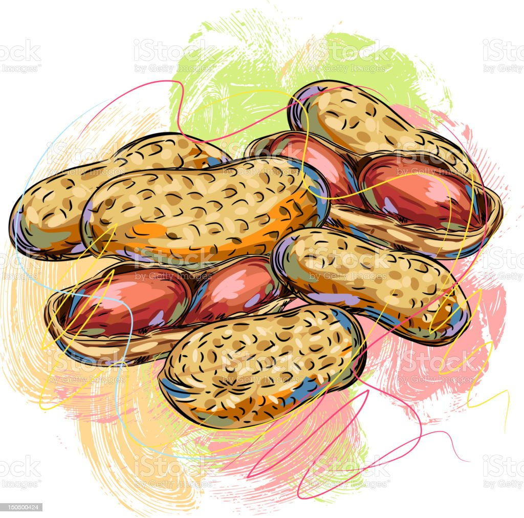 Fresh Peanuts royalty-free stock vector art