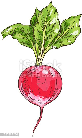 istock Fresh radish, green leaves isolated veggies foot 1220282226