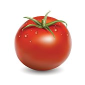 Fresh red tomato with water drops realistic vector illustration isolated on white
