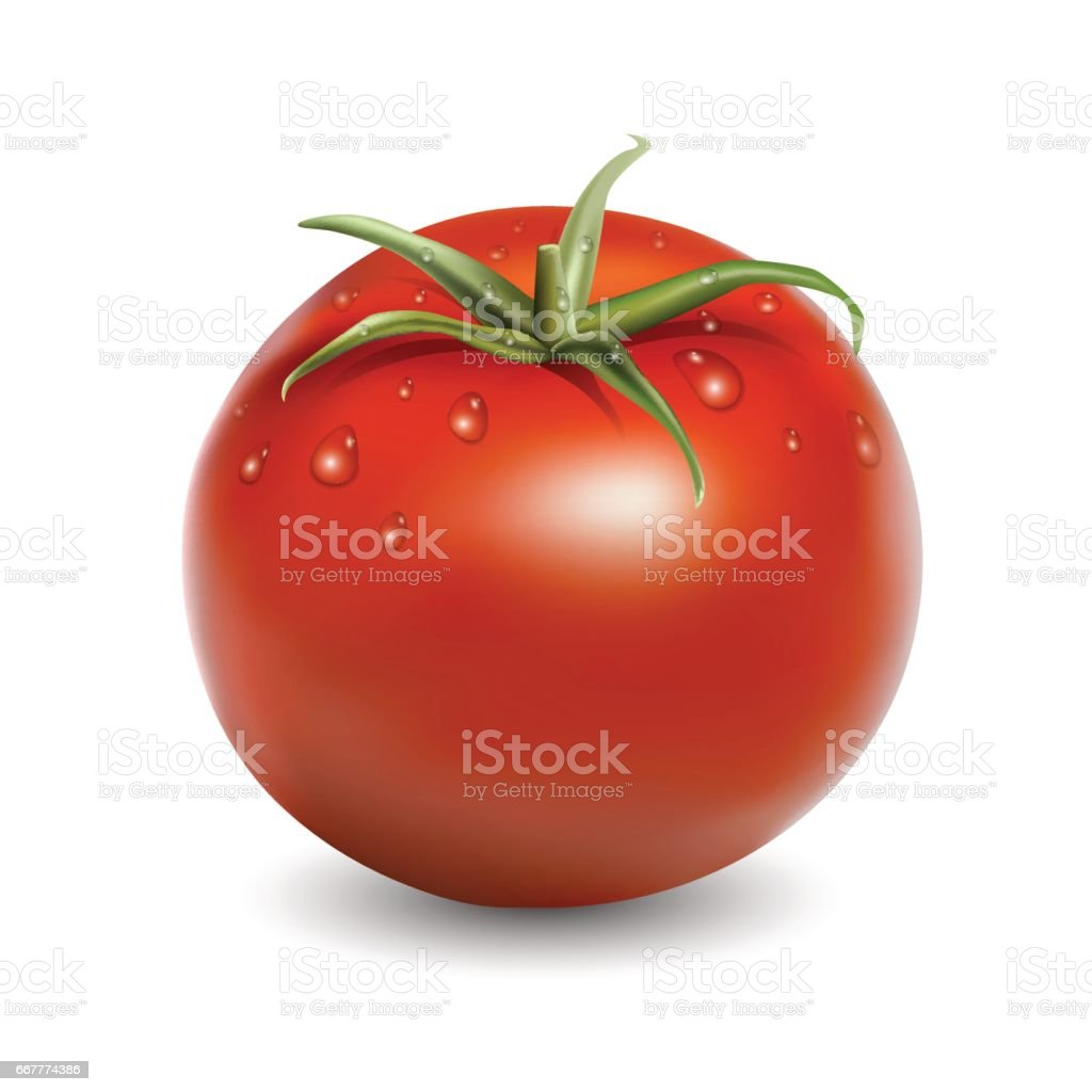 Fresh red tomato with water drops realistic vector illustration isolated on white vector art illustration