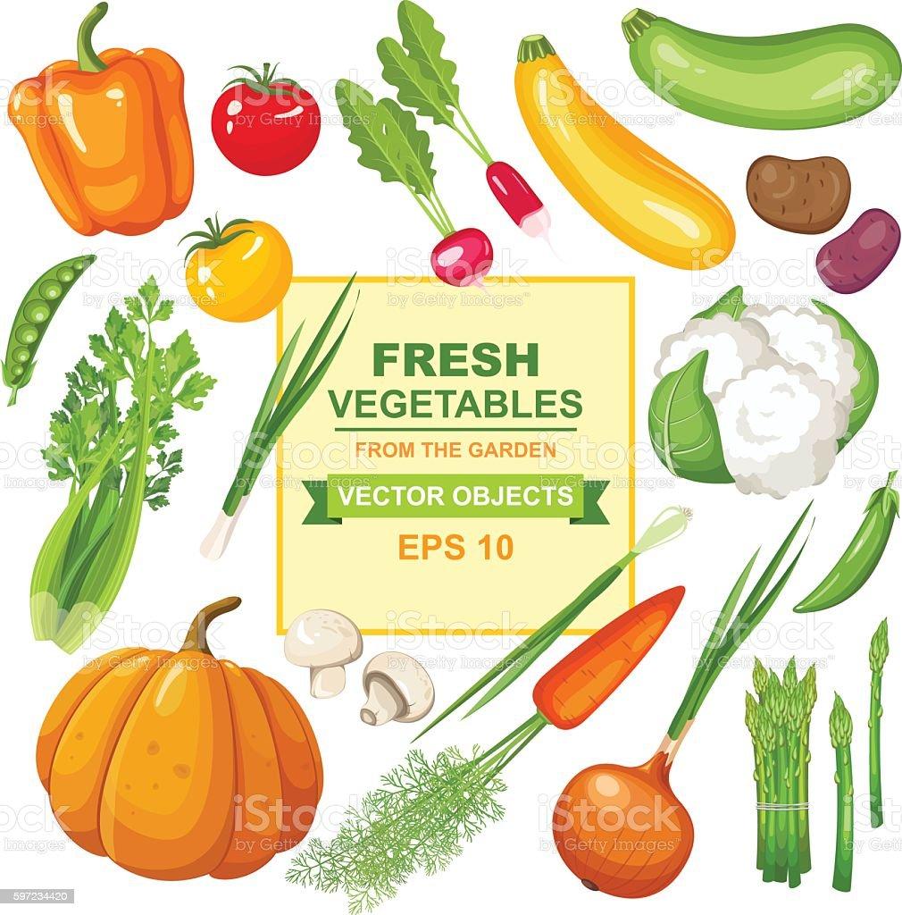 Fresh, ripe, delicious vegetables from the garden vector art illustration