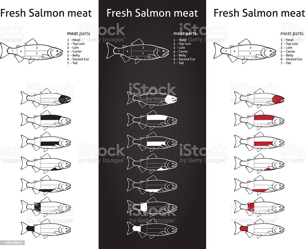 Fresh salmon meat diagram vector art illustration