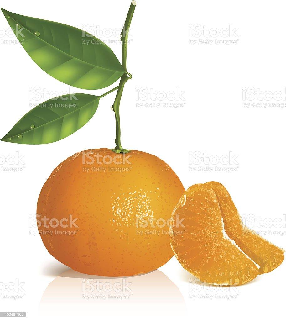 Fresh tangerine fruits with green leaves. vector art illustration