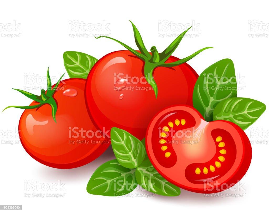 Fresh tomatoes with basil on white background vector art illustration