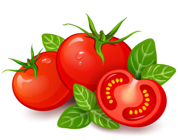 ilustrações de stock, clip art, desenhos animados e ícones de fresh tomatoes with basil on white background - sauce tomatoes