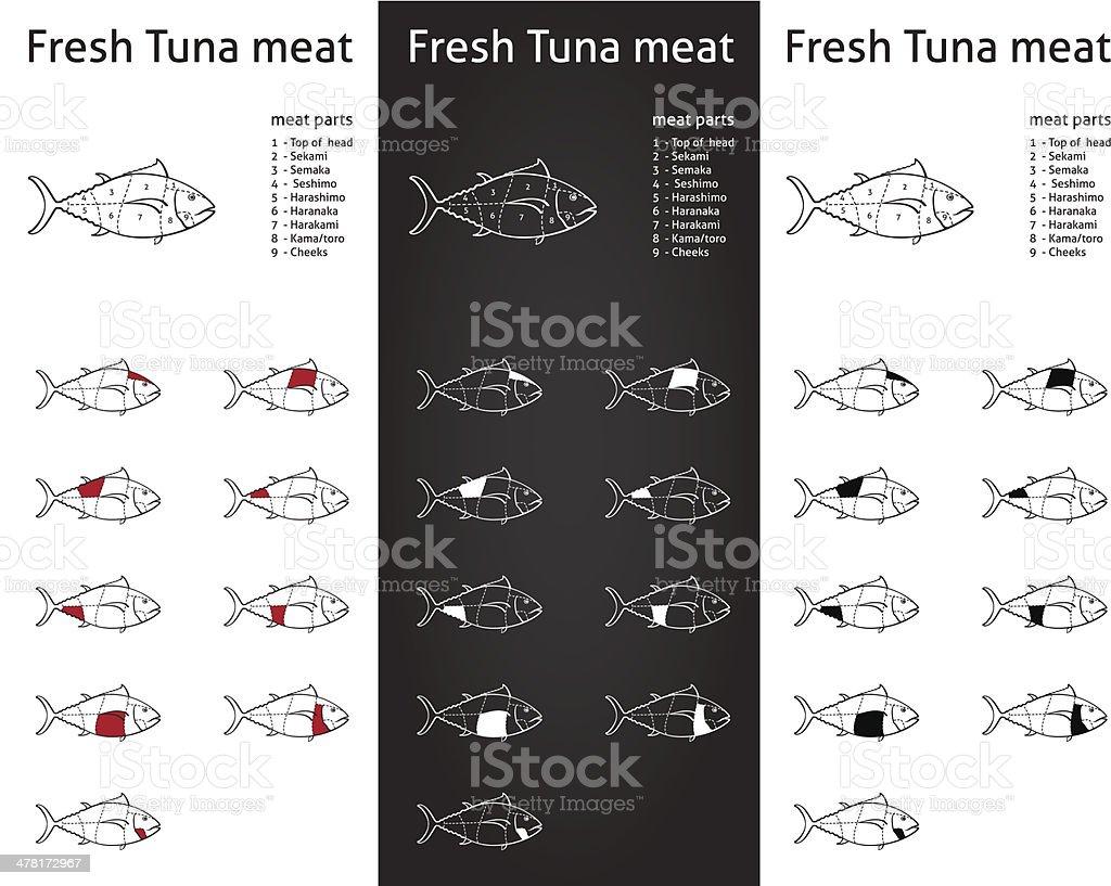 Fresh tuna meat cuts diagram set vector art illustration