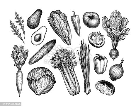 Fresh vegetables. Big set. Ink sketch collection isolated on white background. Hand drawn vector illustration. Retro style.