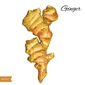 Fresh watercolor ginger root, Hand draw ginger illustration isolated on white background, Organic fresh healthy food ingredient for healthy green market, restaurant menu, kitchen, printing, wallpaper