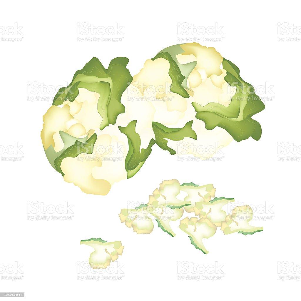 Fresh White Cauliflower royalty-free fresh white cauliflower stock vector art & more images of antioxidant
