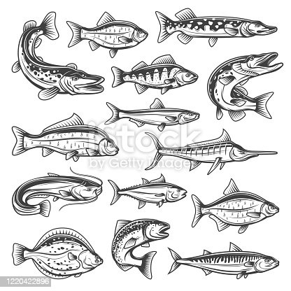 istock Freshwater and ocean vector fish 1220422896