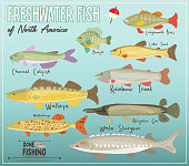 Freshwater Fish of North America. Infographic Poster for Fishing Club. Vector Illustration.
