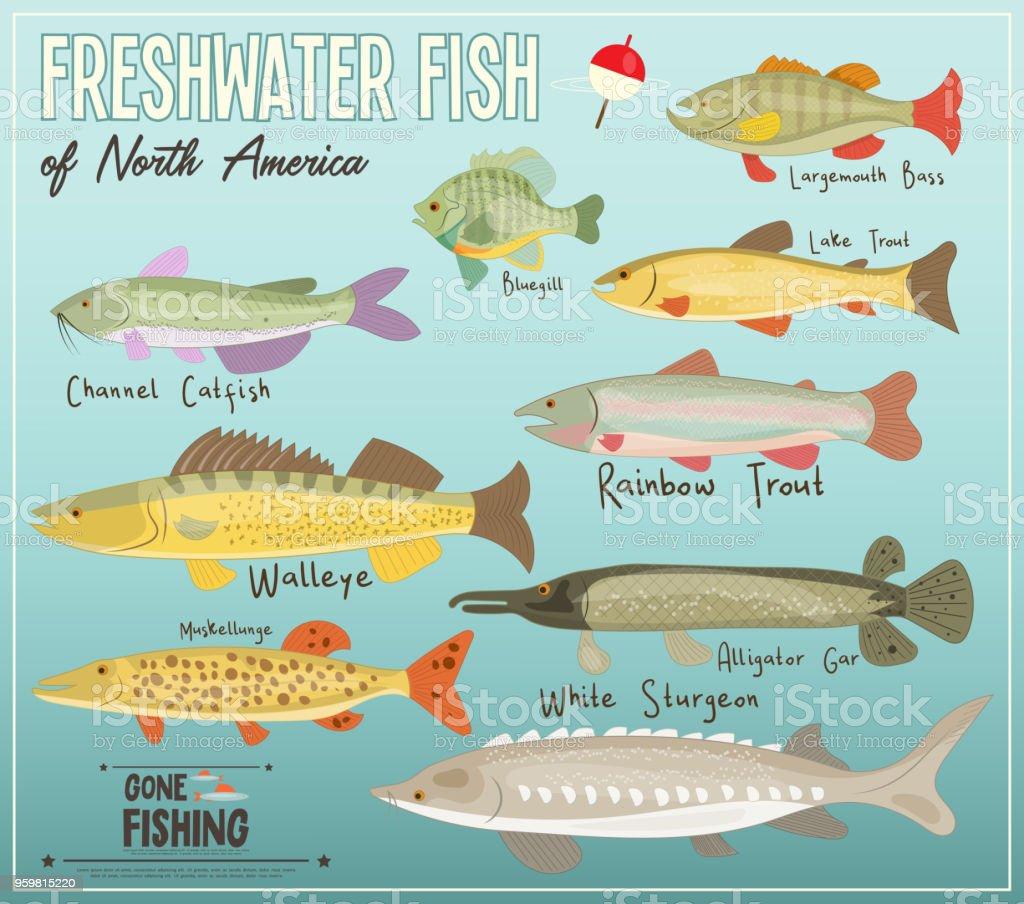 Freshwater Fish of North America vector art illustration