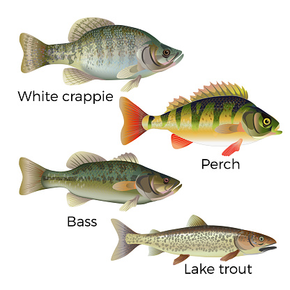 Freshwater fish set