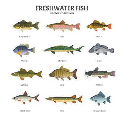 Freshwater fish set.