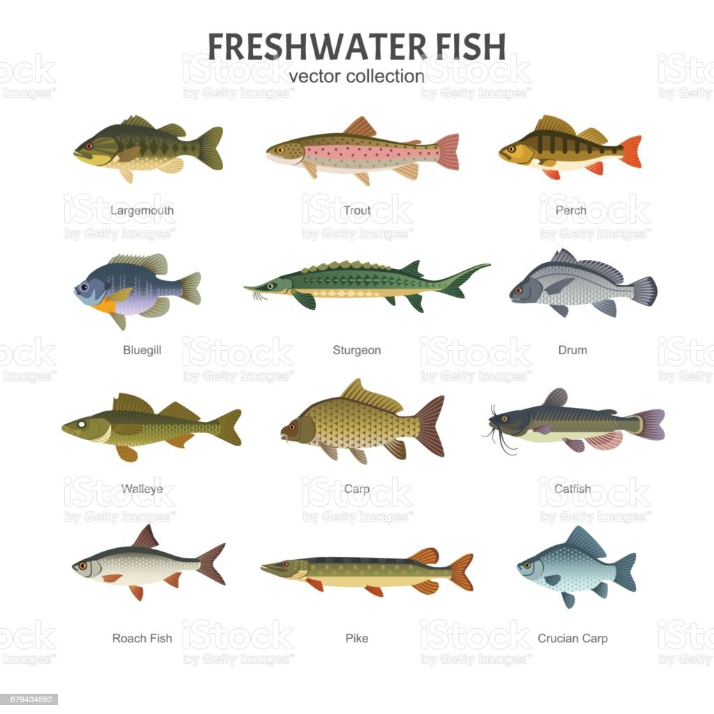 Freshwater fish set. vector art illustration