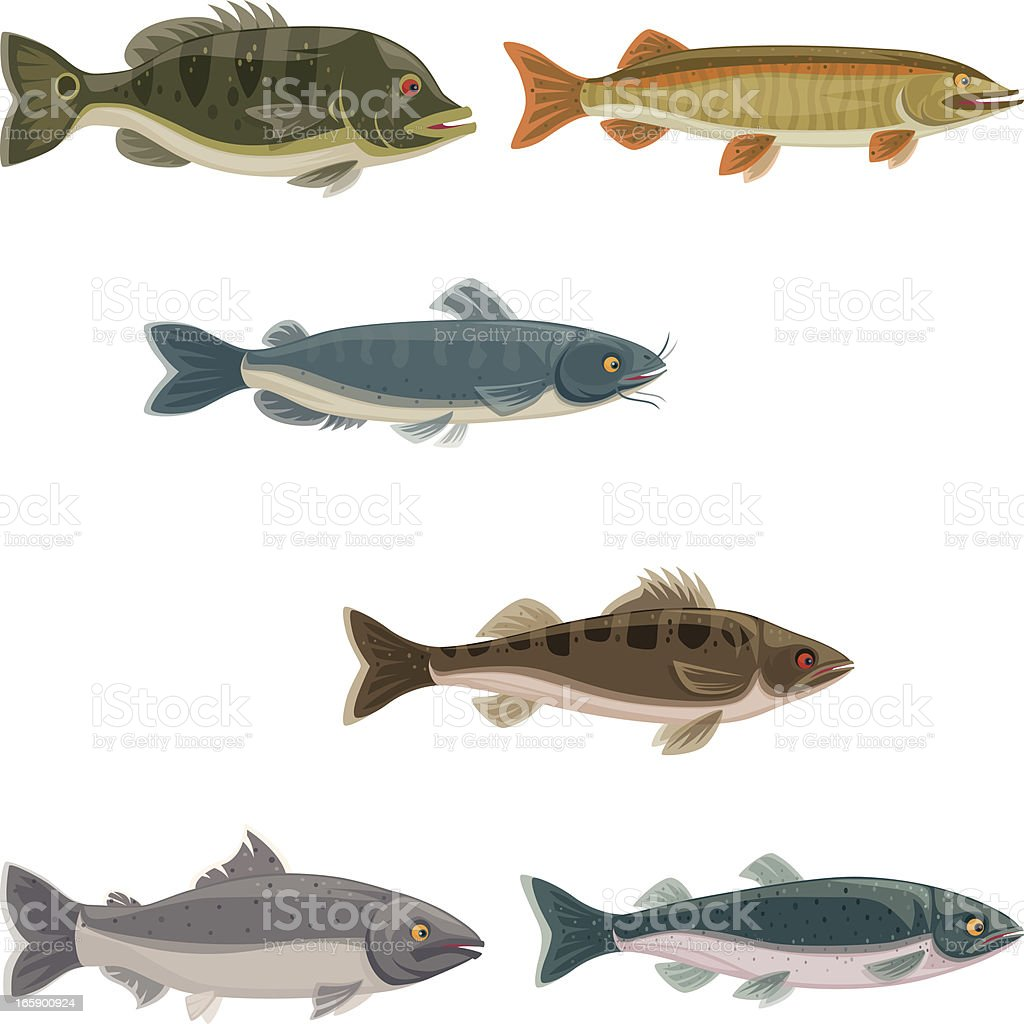 freshwater game fishes vector art illustration