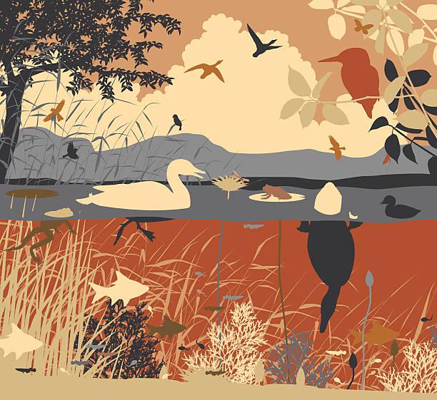stockillustraties, clipart, cartoons en iconen met freshwater pondlife - wildplassen