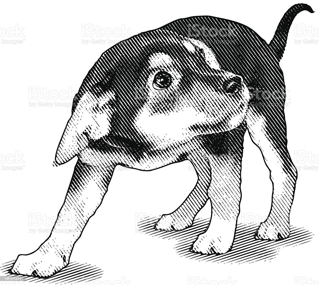 Frightened Puppy vector art illustration