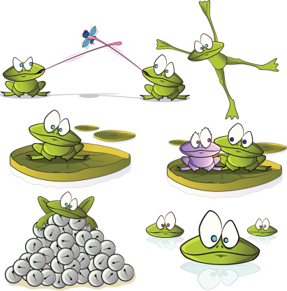 Frog Cartoon Collection
