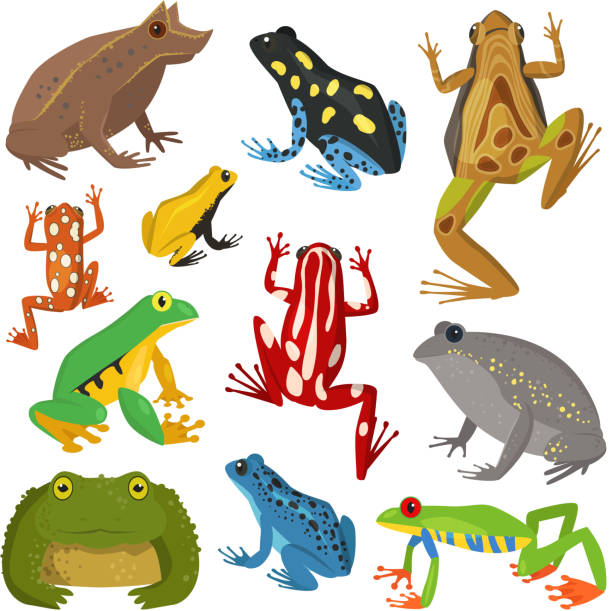 Frog cartoon tropical animal cartoon amphibian vector illustration Frog cartoon tropical animal cartoon nature icon funny and isolated mascot character wild funny forest toad amphibian vector illustration. Graphic ecosystem croaking hop drawin amphibians stock illustrations