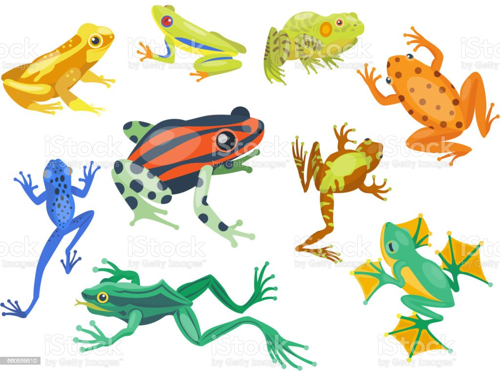 Frog cartoon tropical animal cartoon nature icon funny and isolated mascot character wild funny forest toad amphibian vector illustration - Royalty-free Amphibian stock vector