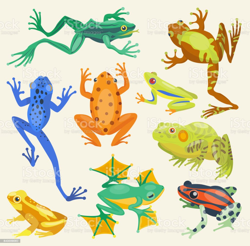 frog cartoon tropical animals vector illustration isolated nature rh istockphoto com Turtle Vector Tree Frog Vector