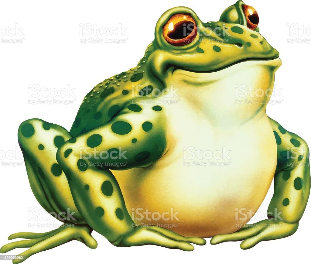 royalty free bull frog clip art vector images illustrations istock rh istockphoto com  american bullfrog clipart