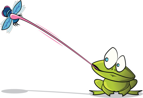 Frog catching a Fly