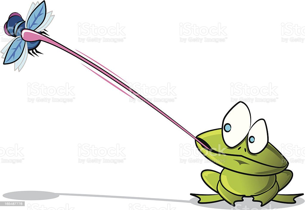 Frog catching a Fly vector art illustration