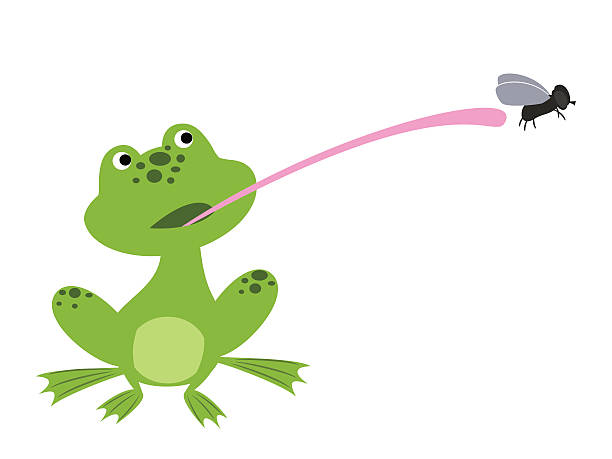 Best Frog Tongue Illustrations, Royalty-Free Vector ...