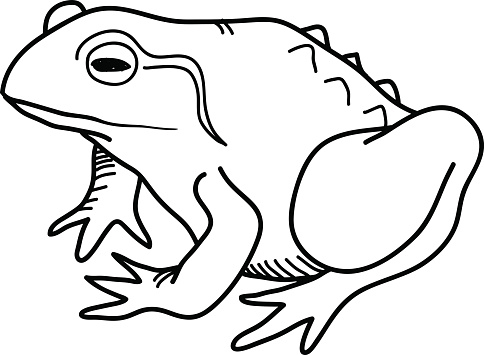 frosch gekritzel stock vektor art und mehr bilder von