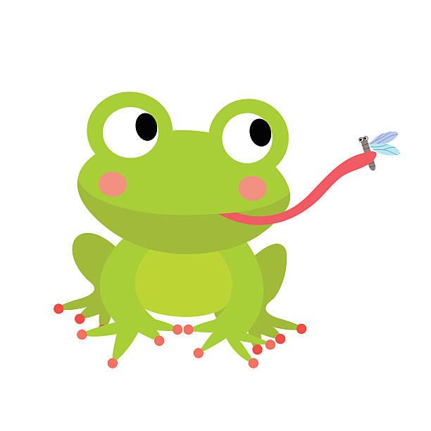 Frog eating fly animal cartoon character vector illustration. vector art illustration