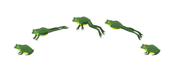 frog jumping animation sequence cartoon vector illustration - jumping stock illustrations