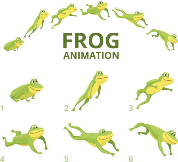 Frog jumping animation. Various keyframes for green animal Frog jumping animation. Various keyframes for green animal. Vector frog animation, jump amphibian animated illustration jumping stock illustrations