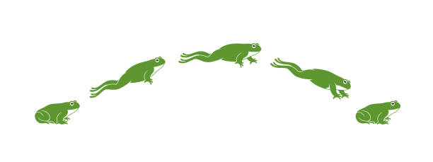 frog jumping. isolated frog jumping on white background - jumping stock illustrations