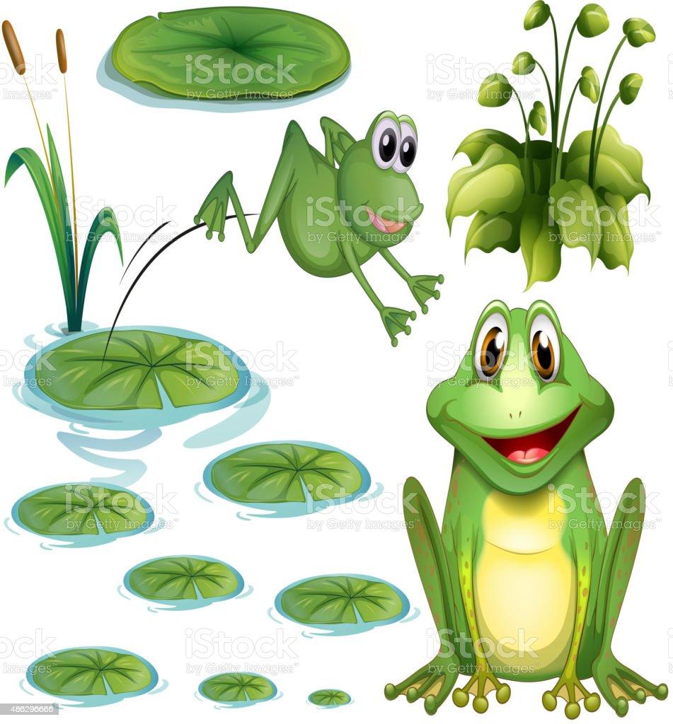 Frog  leaves vector art illustration