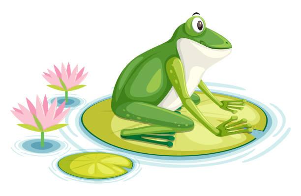 ein frosch auf dem seerosenblatt - seerosenteich stock-grafiken, -clipart, -cartoons und -symbole