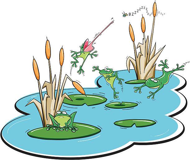 frog pond - seerosenteich stock-grafiken, -clipart, -cartoons und -symbole