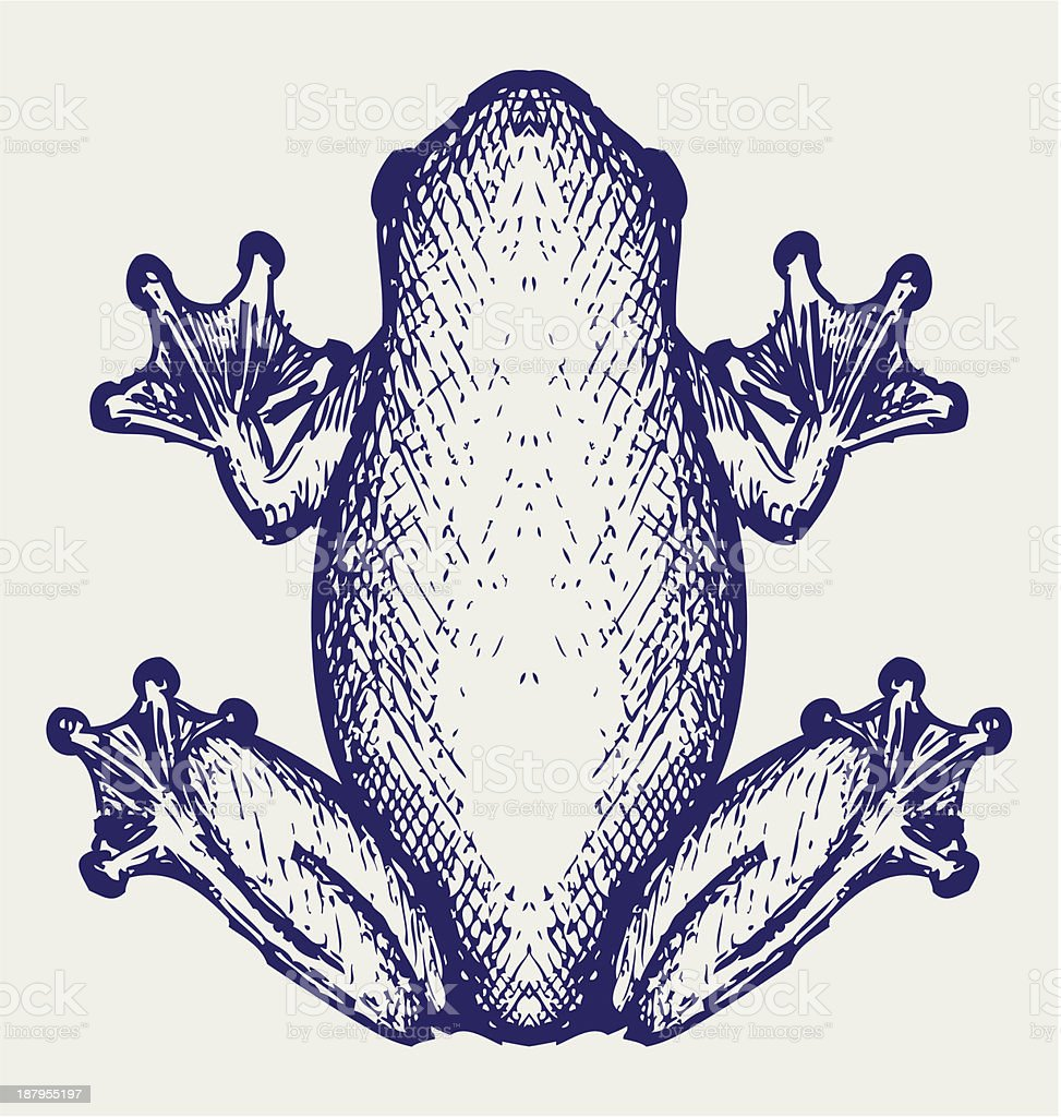 Frog sketch royalty-free stock vector art